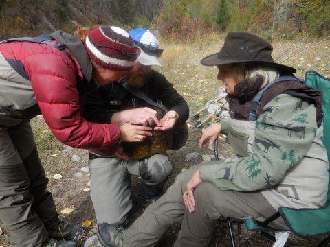 Streamside entomology lesson